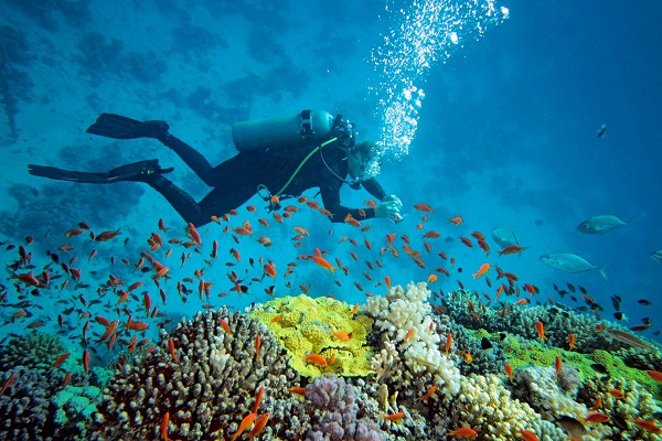 Photo Credit http://www.tripigator.com/blog/everything-you-needed-to-know-about-best-places-for-scuba-diving-in-india/