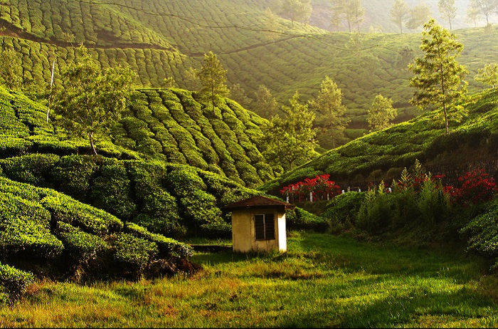 Photo Credit http://echutti.com/munnar-the-serene-and-beautiful-hill-town/