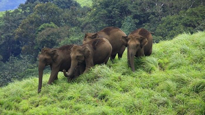 Photo Credit https://www.keralatourism.org/related-destinations/periyar-tiger-reserve-idukki/ds192
