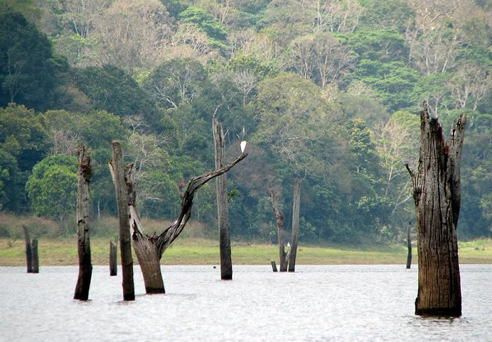 Photo Credit http://www.spiderkerala.net/resources/2620-Periyar-National-Park-and-Tiger-Reserve.aspx