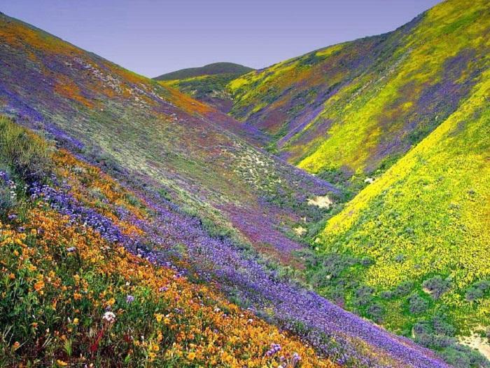 Photo Credit http://www.wlivenews.com/valley-of-flowers-chamoli-uttaranchal-close-to-nanda-devi-national-park.html