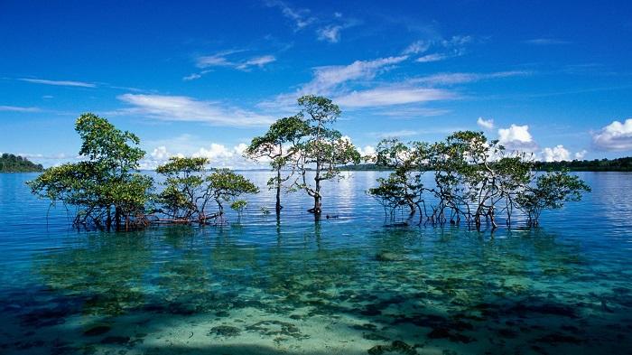 Photo Credit http://tourist-places.globalvisiontours.com/2013/01/mahatma-gandhi-marine-national-park.html