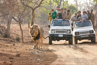Photo Credit http://www.lookatindia.in/touristplaces/gir-national-park.html