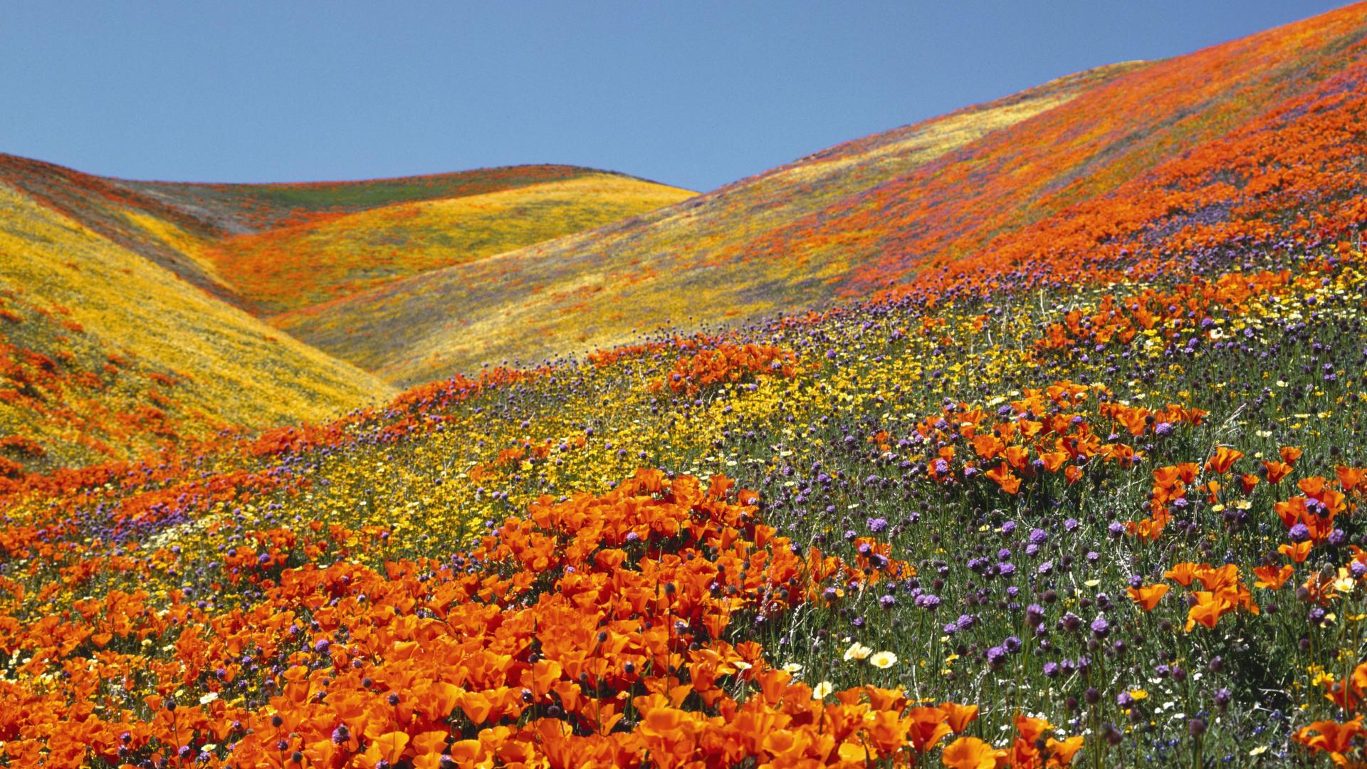 Photo Credit http://uttarakhandpravasi.com/about-uttarakhand/Tourism/valley-of-flowers/