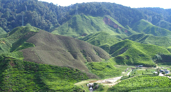Photo Credit https://www.tourmyindia.com/weekend-tours/coorg-weekend-tour.html