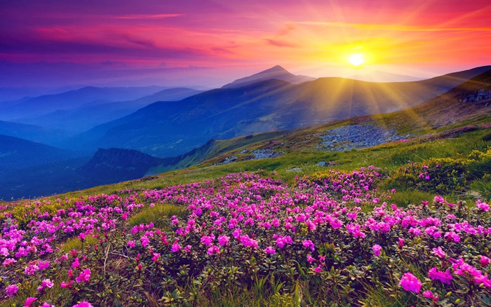 Photo Credit http://netdost.com/profiles/blogs/the-valley-of-flowers-in-uttarakhand-india-is-beautiful