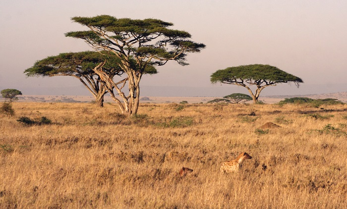 Photo Credit  http://famouswonders.com/serengeti-migration-from-tanzania-to-kenya/