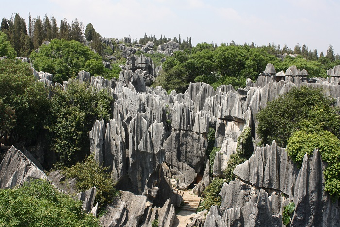 Photo Credit https://clareinchina.wordpress.com/2012/06/05/%E7%9F%B3%E6%9E%97stone-forest/