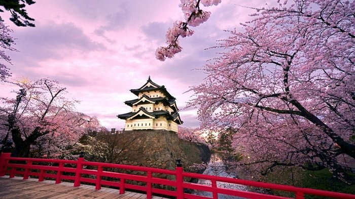 Photo credits http://gallerygogopix.net/japan+kyoto+cherry+blossoms?image=356509387
