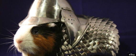 Photo Credit:http://www.huffingtonpost.com/2013/06/26/guinea-pig-armor-sold_n_3503668.html?ir=India&adsSiteOverride=in