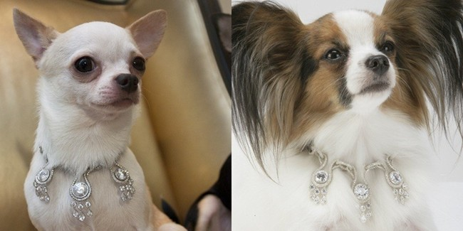 Photo Credit:http://www.luxury-insider.com/luxury-news/2013/07/amour-amour-worlds-most-expensive-dog-collar
