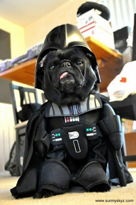 Photo Credit http://www.sunnyskyz.com/happy-pictures/224/Darth-vader-dog