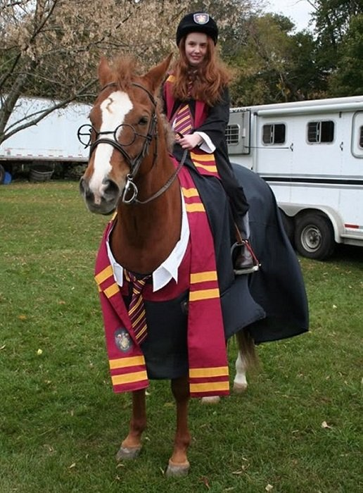 Photo Credit http://www.buzzfeed.com/babymantis/horses-dressed-as-harry-potter-1opu