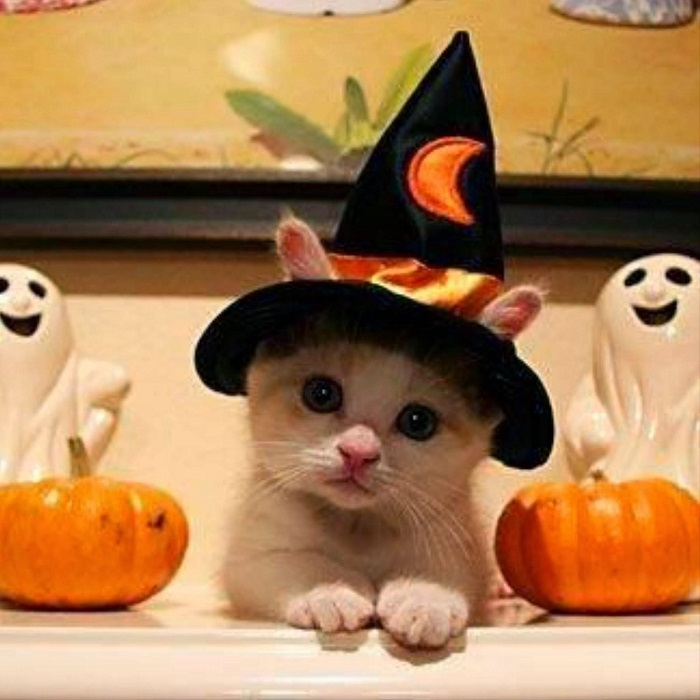 Photo Credit http://imgkid.com/cute-cats-in-halloween-costumes.shtml