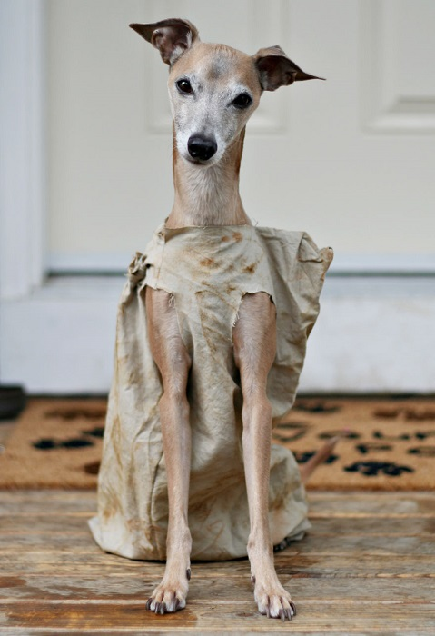 Photo Credit http://www.earthporm.com/25-terrifying-cute-halloween-costumes-pets/