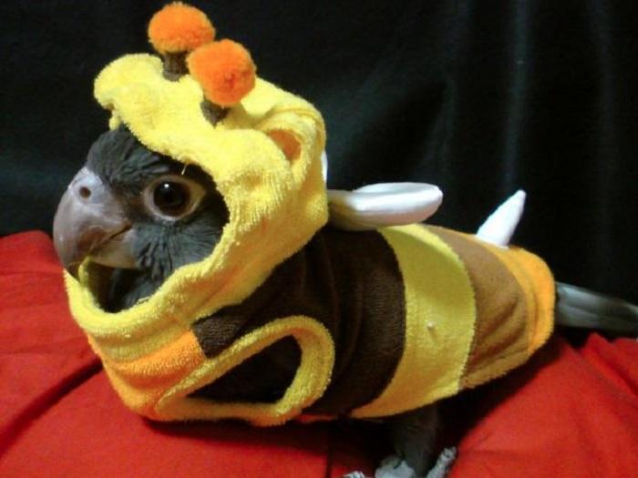 Photo Credit http://www.hypertomb.com/halloween-pets/