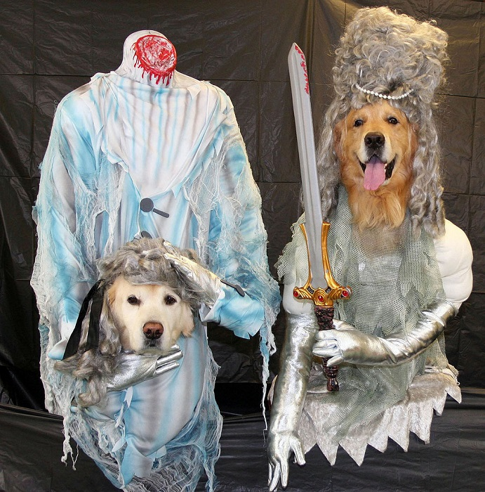Photo Credithttps://www.rover.com/blog/terrifying-dog-costumes/