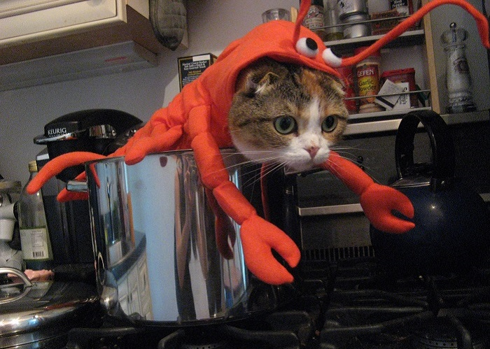 Photo Credit http://retrolife.typepad.com/katamari/2009/10/perhaps-the-greatest-thing-you-will-ever-see-in-your-life-a-cat-in-a-lobster-costume-in-a-lobster-po.html