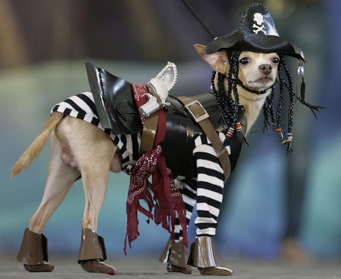 Photo Credit http://themix1063.com/news/030030-23-dogs-making-your-halloween-costume-lame/