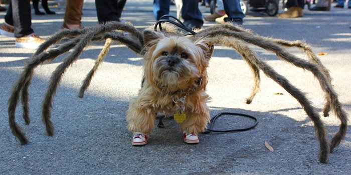 Photo Credit http://www.huffingtonpost.com/2014/10/27/nyc-halloween-dog-parade_n_6054800.html?ir=India&adsSiteOverride=in