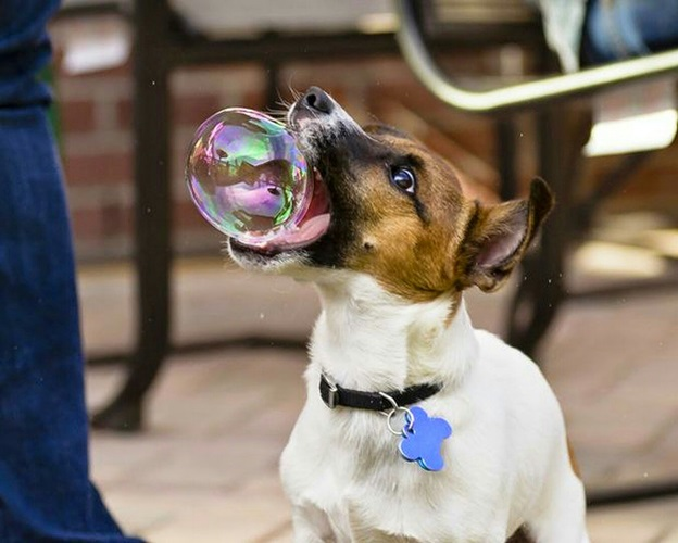Photo Credit:https://www.reddit.com/r/photoshopbattles/comments/2ehuqq/psbattle_perfectly_timed_dog_biting_bubble_xpost/