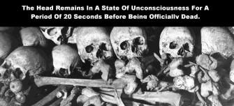 skulls-and-bones-1