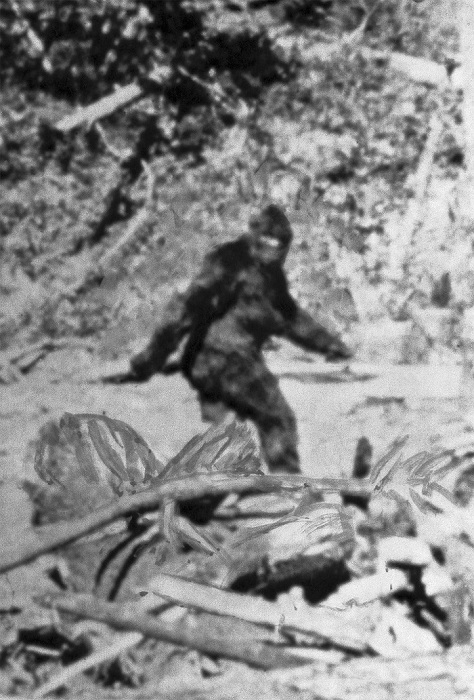 Photo Credit http://voices.nationalgeographic.com/2014/07/01/yeti-bigfoot-dna-hair-study-science-animals-himalaya/